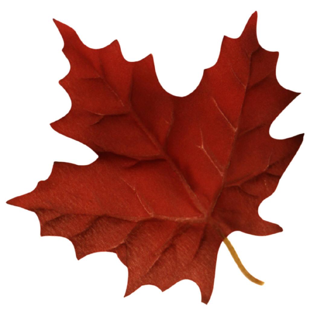 Canadian Maple Leaf Clip Art
